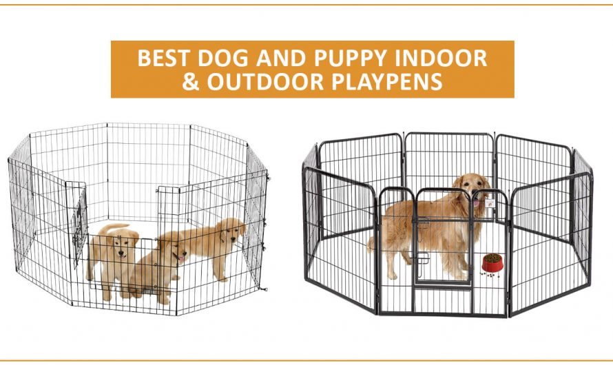 Top Best Playpens For Dogs  (REVIEW) in 2020